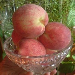 Cаженцы персика