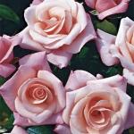 """Плетистая роза """"Хай Хоупс"""""""